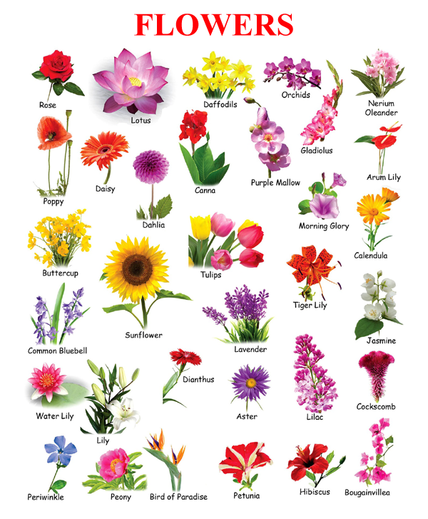 the gallery for pictures of flowers with names for kids